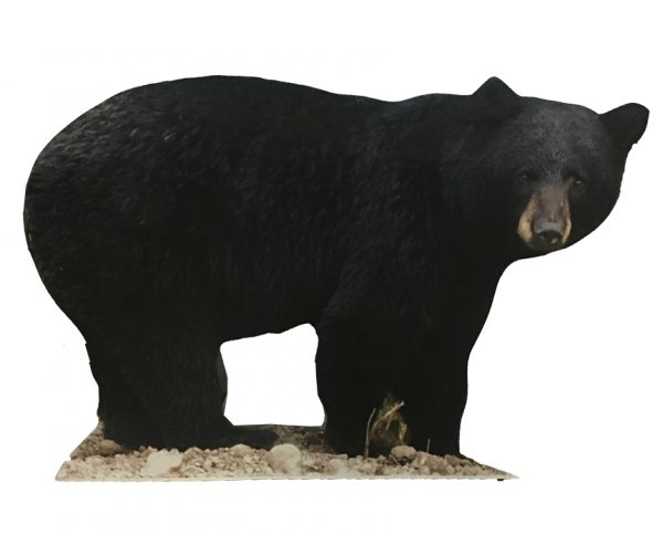 Bear-Cut-out