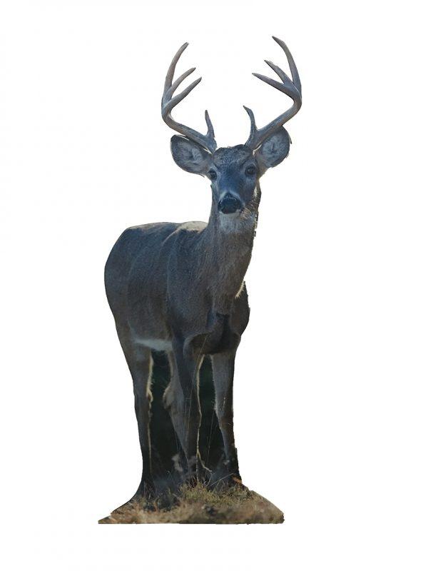 Deer-Cut-out
