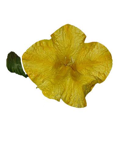 Genetiana Flower- Yellow INV197
