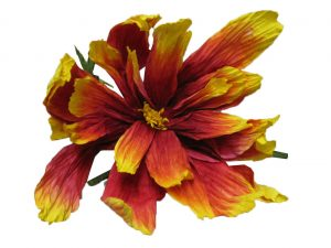 Giant-Red-and-Yellow-Tagete-Flower