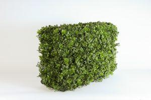 INV505-boxwood hedge (2)