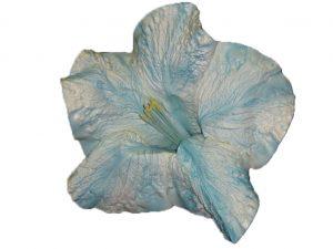 genetiana-Flower-Sky-Blue