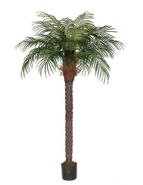 Palm Tree 8 Foot
