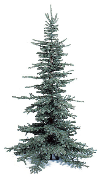 Tree – Frasier Pine 8 Feet